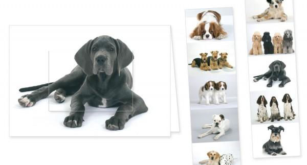 """Türchenkarte """"Bunte Hunde"""""""