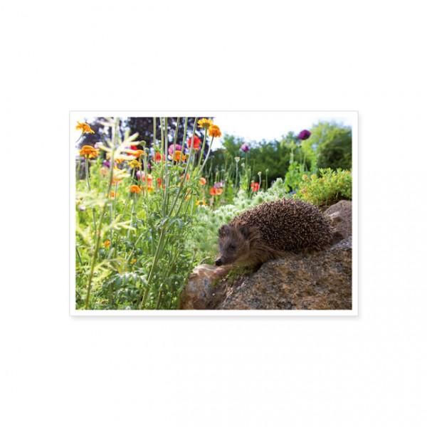 "Postkarte ""Igel in der Wildblumenwiese"""