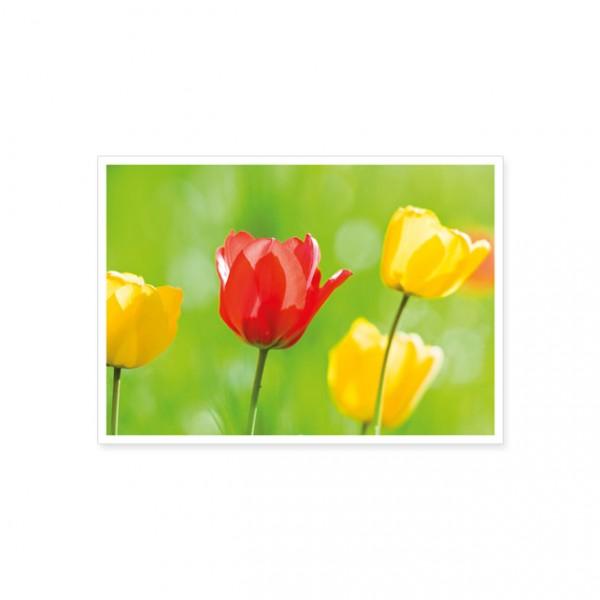 """Postkarte """"Gelbe und rote Tulpenblüten"""""""