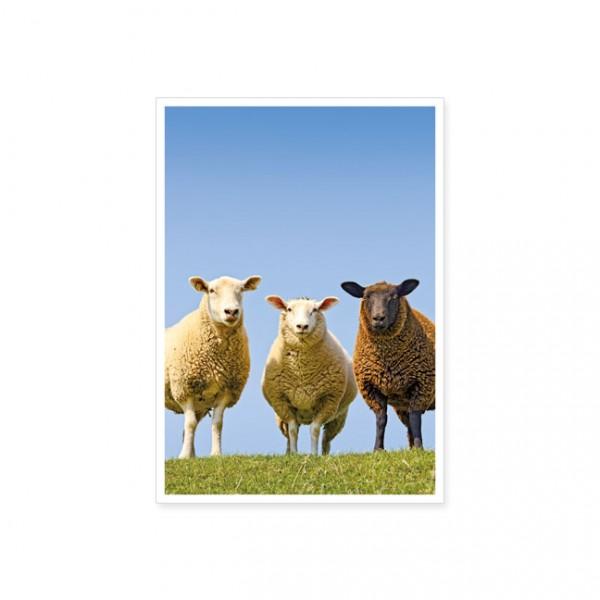 "Postkarte ""Drei Schafe"""