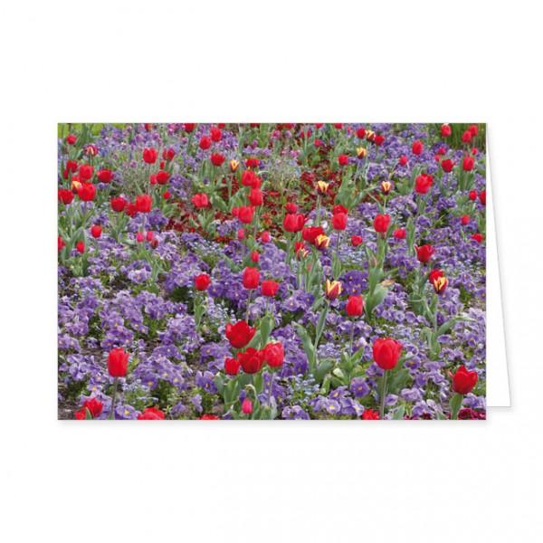"""Doppelkarte """"Rote Tulpen und blaue Stiefmütterchen"""""""