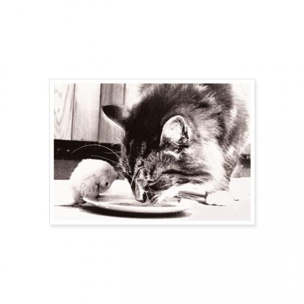 """Postkarte """"Katz und Maus"""""""