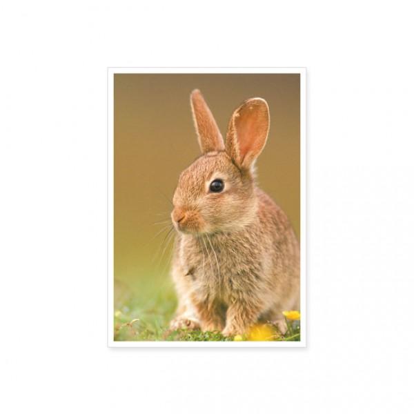 """Postkarte """"Kaninchen im Feld"""""""