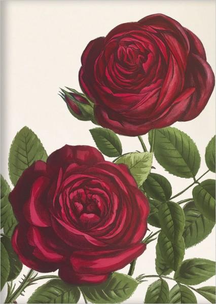 """kl. Kladden A6 """"Rote Rosen"""""""