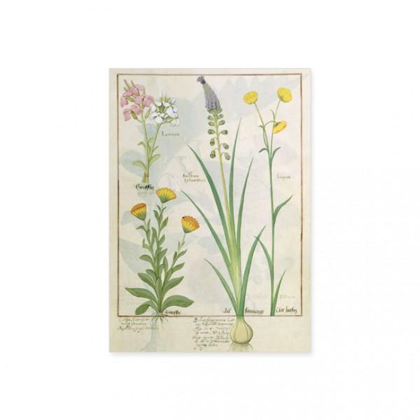 """Postkarte Gold """"Das Buch der Einfachen Heilmittel Folie 118r"""""""