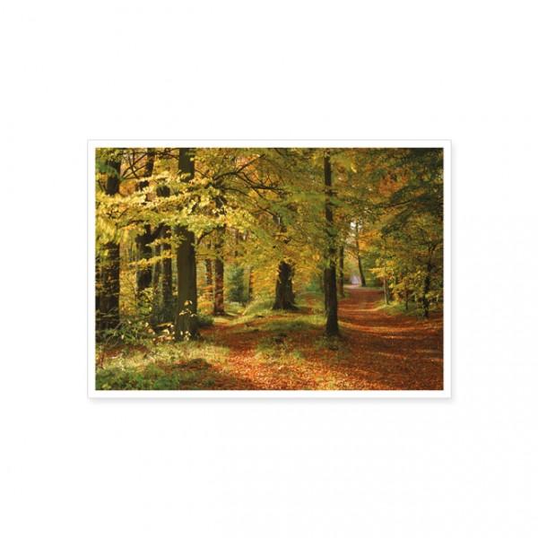 """Postkarte """"Herbstwald"""""""