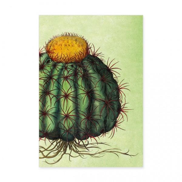 """Postkarten Large """" Kaktus """""""