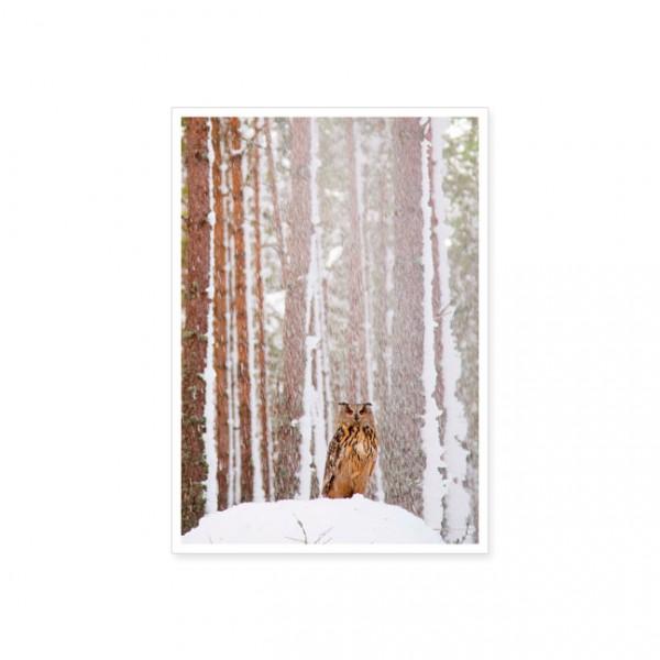"Postkarte ""Uhu im schneeverhangenem Wald"""