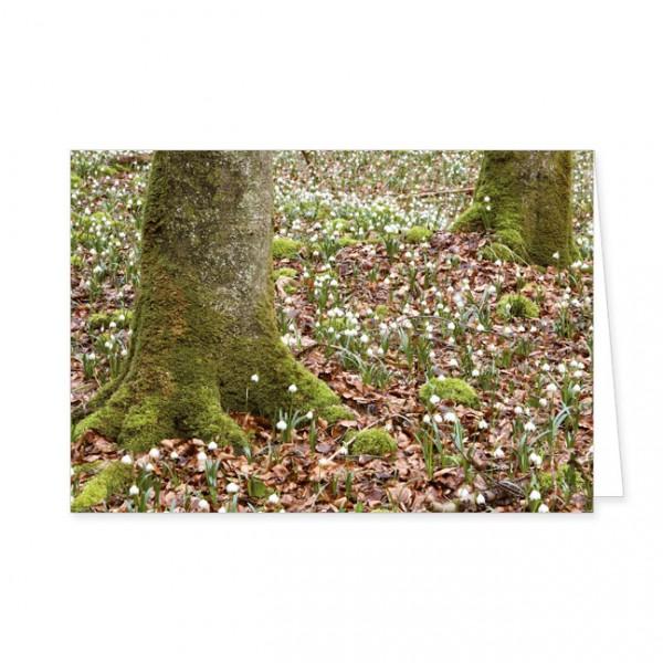 "Doppelkarten ""Märzbecherfeld im Wald"