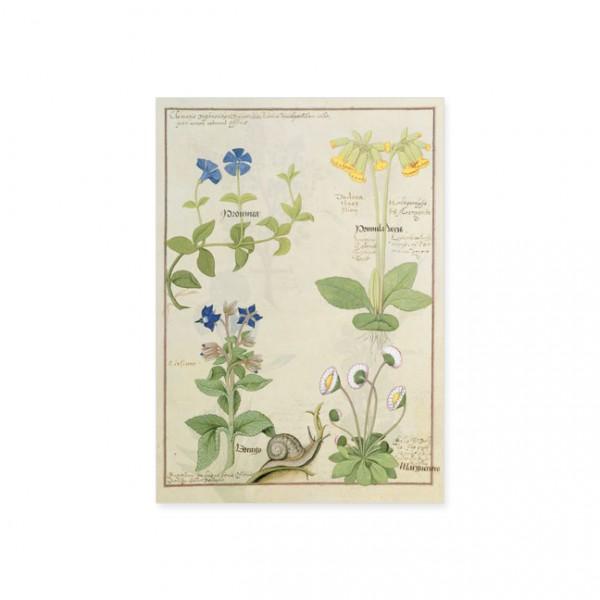 """Postkarte Gold """"Blaue Clematis oder Hahnenfuß und Primula"""""""