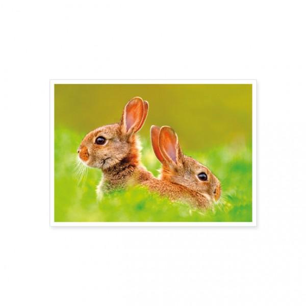 """Postkarte """"Junge Kaninchen im Gras"""""""