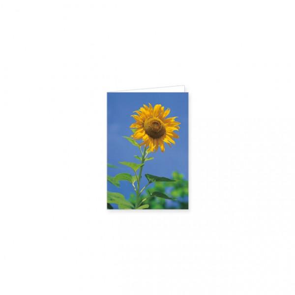 """Mini-Doppelkarte """"sonnenblume vor blauem himmel"""""""
