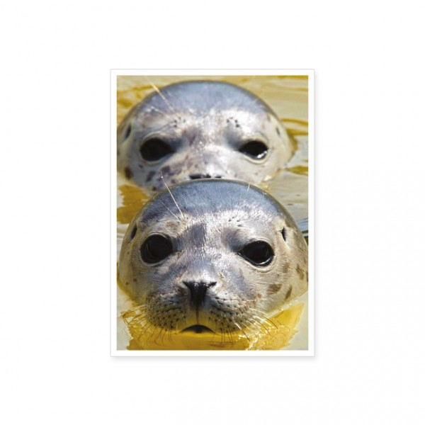 "Postkarte ""Zwei Seehunde"""