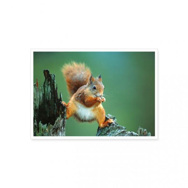 """Postkarte """"Balanzierendes Eichhörnchen"""""""