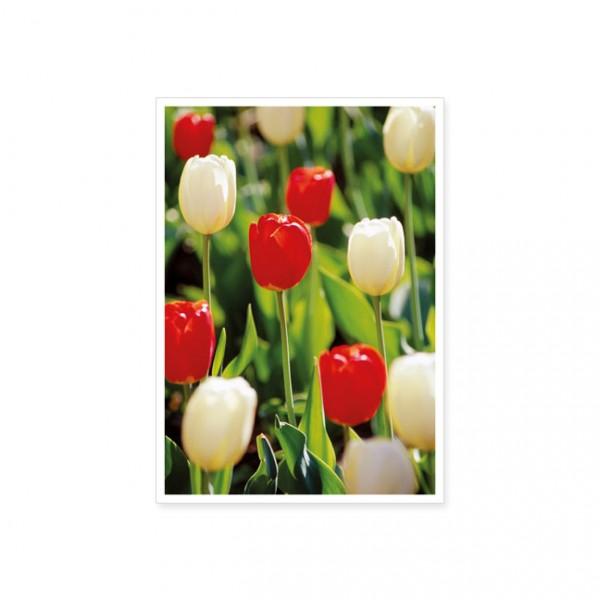 """Postkarte """"Rote und weiße Tulpen"""""""