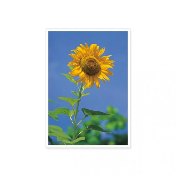 """Postkarte """"Sonnenblume vor blauem Himmel"""""""