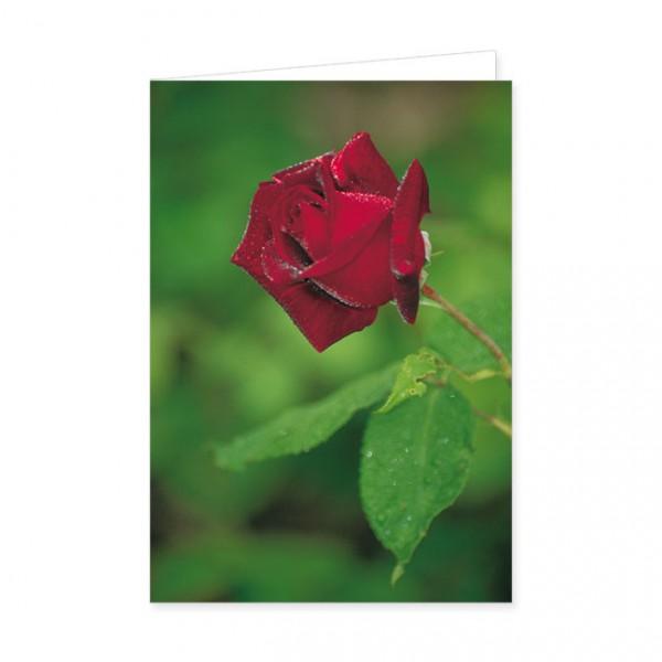 """Doppelkarte """"Rose"""""""