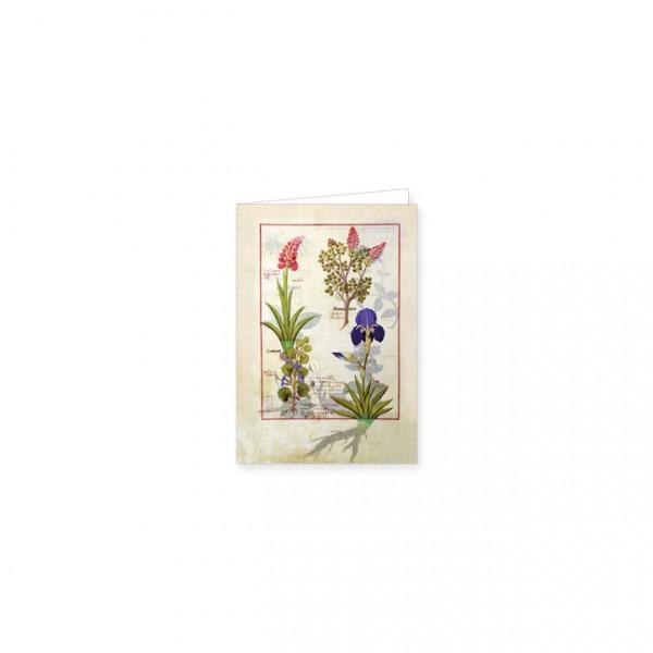 """Mini-Doppelkarten Gold """"Orchidee und Erdrauch oder Tränendes Herz"""""""