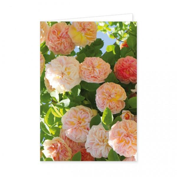 "Doppelkarte ""Rose Alchymist"""