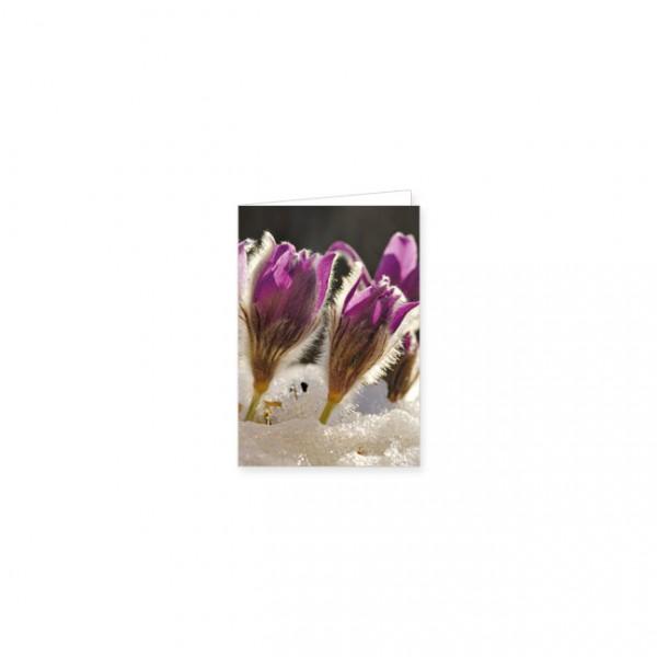 """Mini-Doppelkarte """"Anemonen nach der Schneeschmelze"""""""