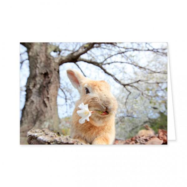 """Doppelkarten """"Wildkaninchen mit Kirschblüte"""""""