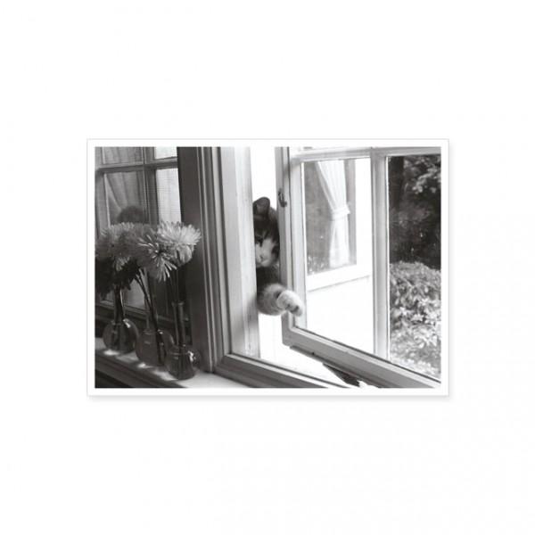 "Postkarte ""Schlaue Katze"""