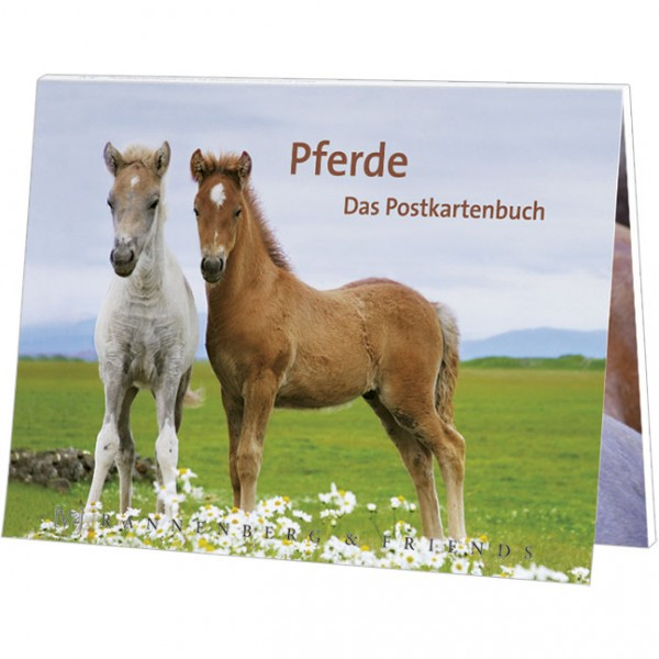 Postkartenbuch 'Pferde'