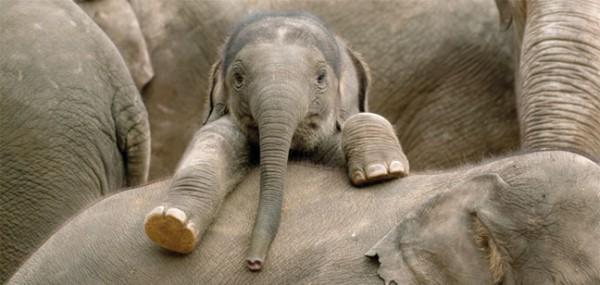 """XXL-Postkarte """"Baby Elephant"""""""