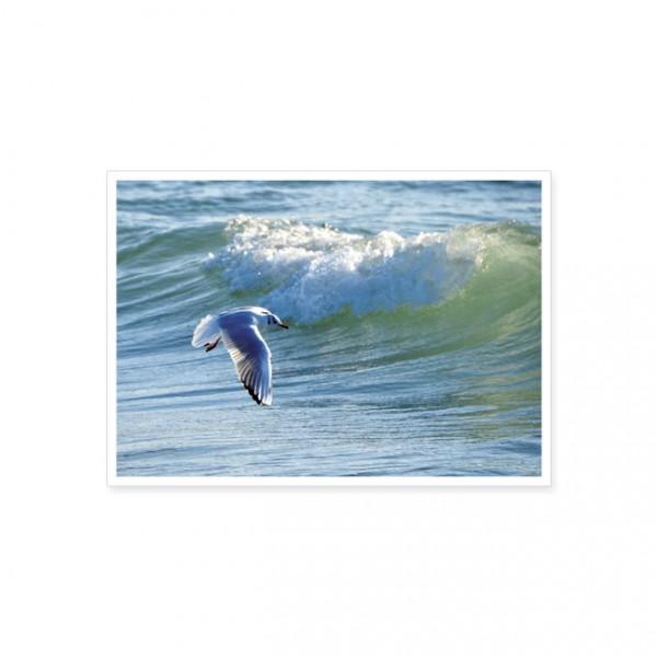 "Postkarte ""Möwe über dem Meer"""