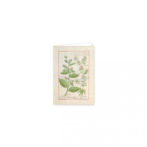 """Mini-Doppelkarten Gold """"Das Buch der Einfachen Heilmittel Folie 159r"""""""