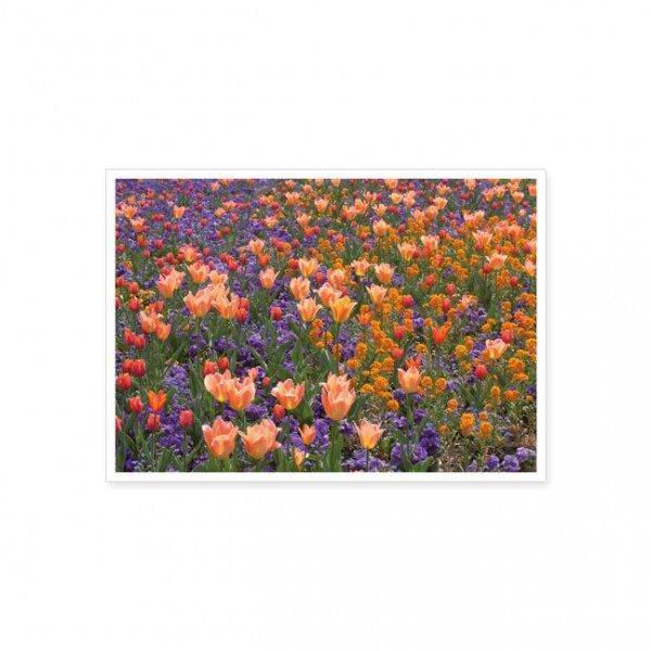 """Postkarte """"Frühlingsbeet mit Tulpen"""""""