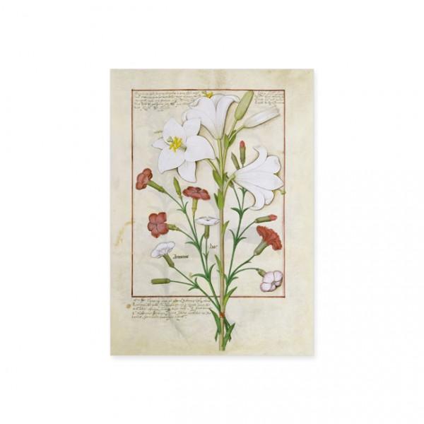 """Postkarte Gold """"Das Buch der Einfachen Heilmittel Folie 149r"""""""