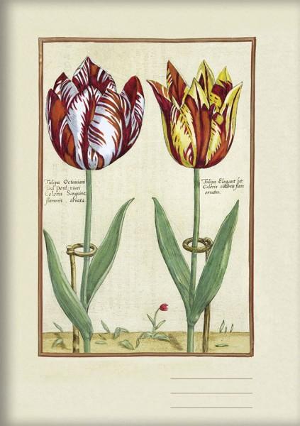 Kladden A5 'Tulipa Octaviani und Tulipa Elegant'