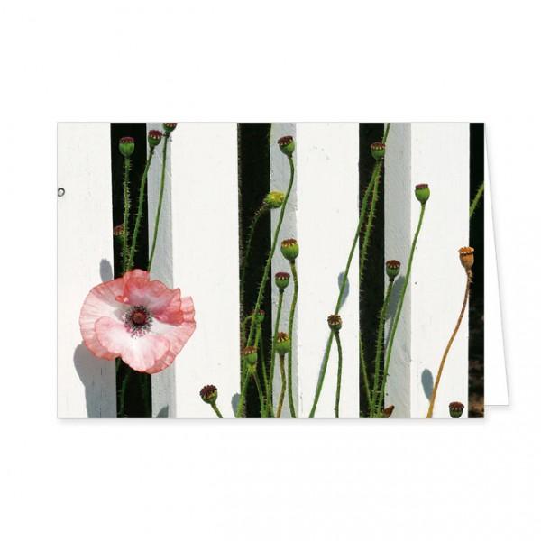 "Doppelkarte ""Mohnblüte im Zaun"""