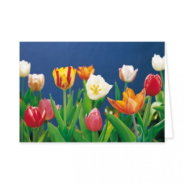 """Doppelkarte """"Tulpen vor blauem Hintergrund"""""""