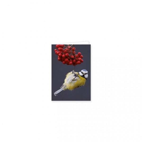 "Mini-Doppelkarte ""Blaumeise an Vogelbeeren"""