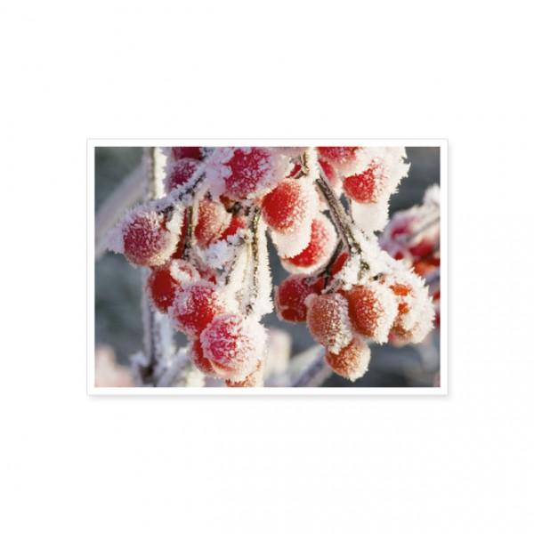 "Postkarte ""Rote Beeren im Herbstfrost"""