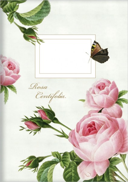 Kladden A6 'Rosa centifolia'