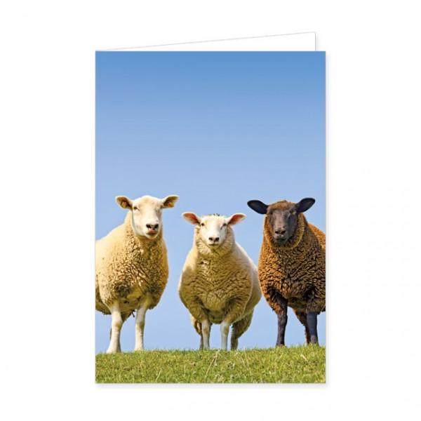 """Doppelkarten """"Drei Schafe"""""""