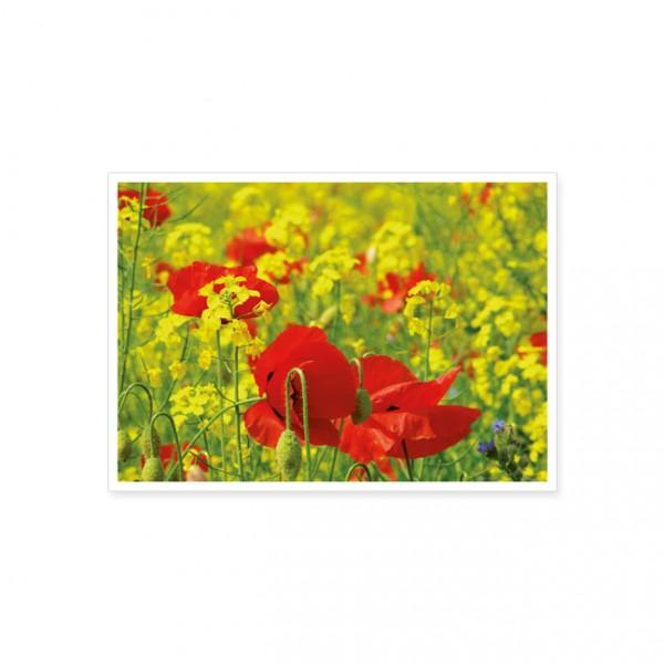 "Postkarte ""Mohn im Rapsfeld"""