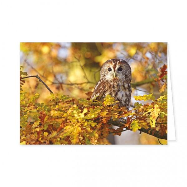 """Doppelkarte """"Waldkauz im Baum"""""""