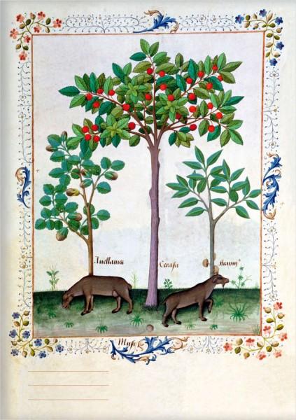 Kladden A5 'Haselnussbusch und Kirschbaum'