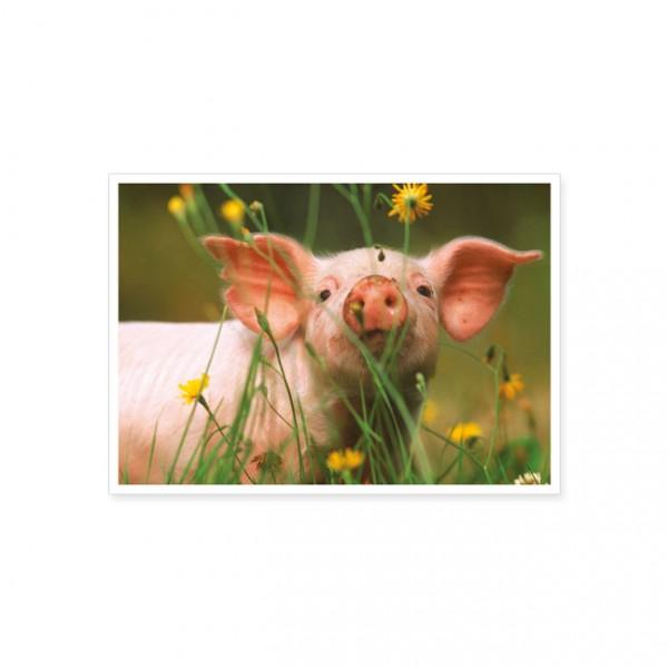 """Postkarte """"Schweineschnauze"""""""
